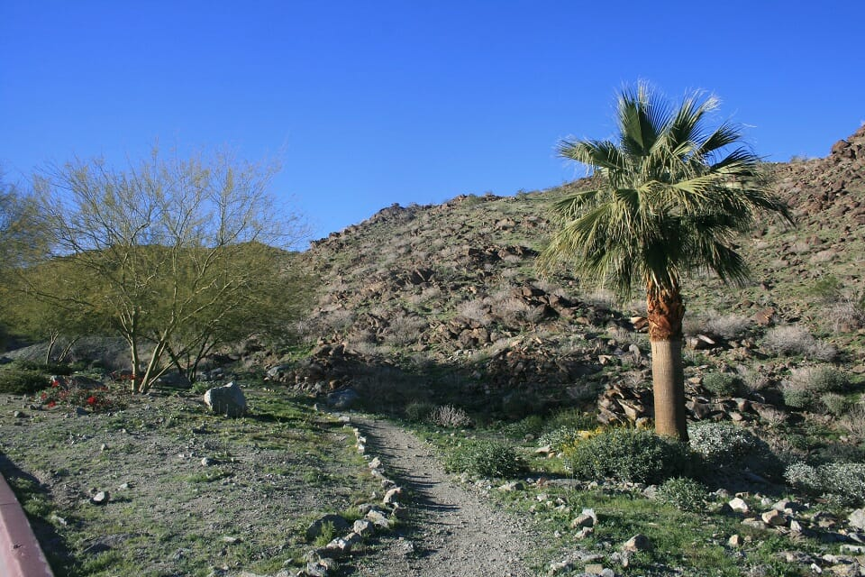 Roadrunner Trail/Chuckwalla Loop Great Day Hike