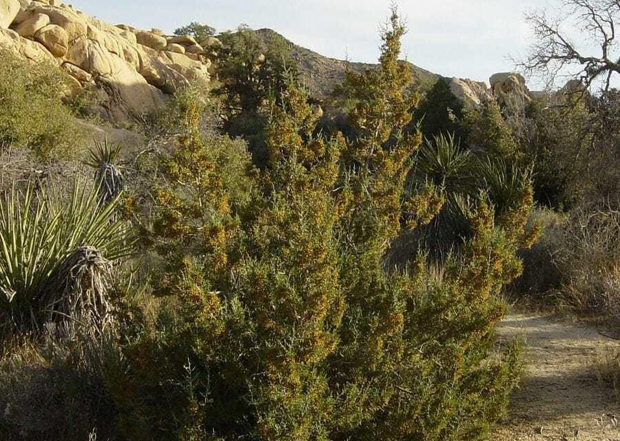 Palm Canyon Trail – Upper Reaches Segment