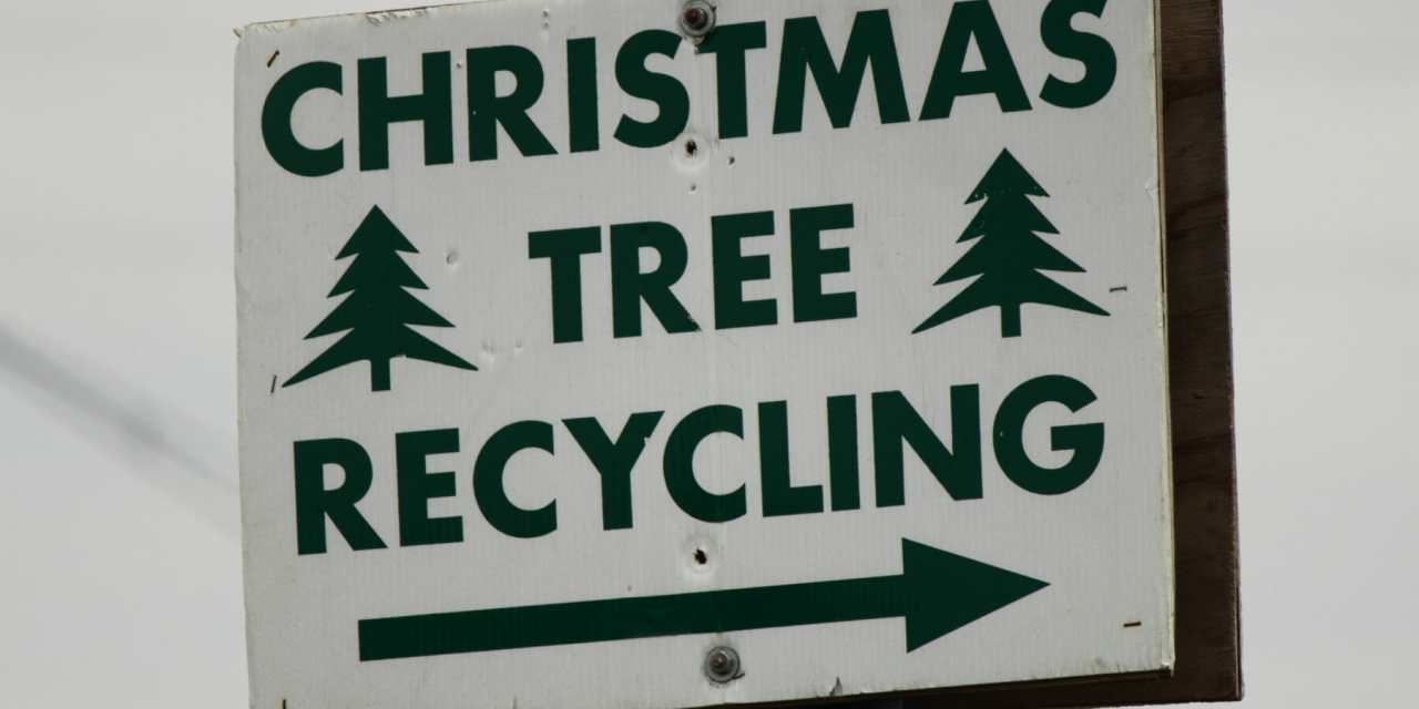 Recycle Your Christmas Tree, Return it to Ground
