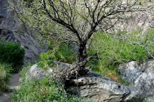 Tahquitz Canyon Trail heads to 60-foot waterfall