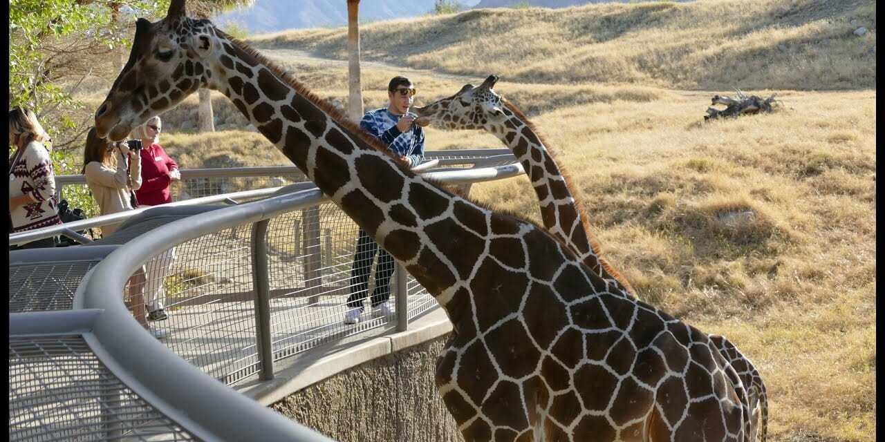 Zoo's Speaker Series Focuses on Conservation