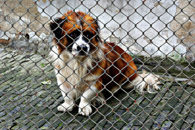 Ways to Observe National Rescue Dog Day