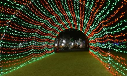 Living Desert Receives Award for Best Zoo Lights