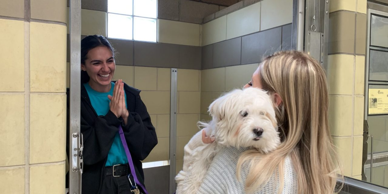 Pet Adoptions Spike During COVID-19 [VIDEO]