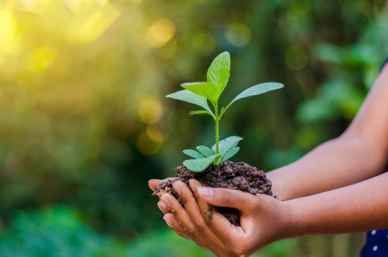 Are You Celebrating World Environment Day?