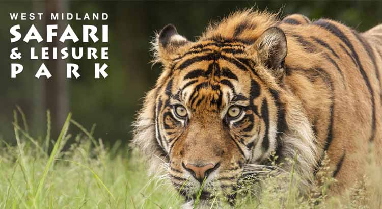 West Midland Safari Park Free Ticket Offer