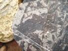Non-descript wood pieces in split limestone nodule