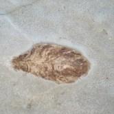 Worn heteropolar coprolite