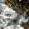 Brachiopods covered in lichens