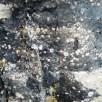 Crinoid pieces in black chert
