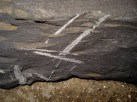 Graptolites appearing to cross the bedding planes