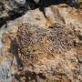 Headland coral