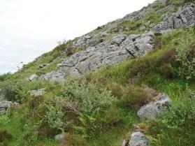 Limestone outcrop