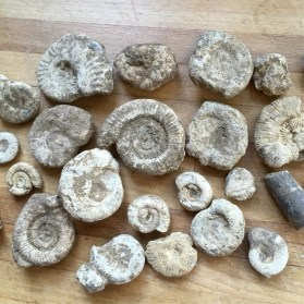 Kingstone, Somerset, yields many Jurassic ammonites.