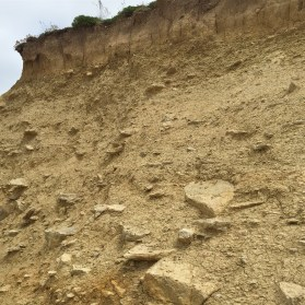 Frome Clay, white cementstone bed at Cogden Beach, Dorset