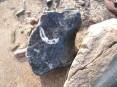 Block with brachiopod cross section