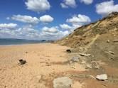 Fossil collecting at Cogden Beach, Dorset