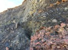 Carboniferous spoil from Saltcom Bay, a mixture of shale and siltstones.