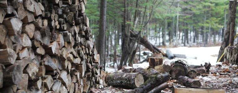 Przetarg na zrywkę i pozyskanie drewna na rok 2018