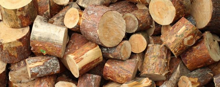 Oferta handlowa na sprzedaż drewna