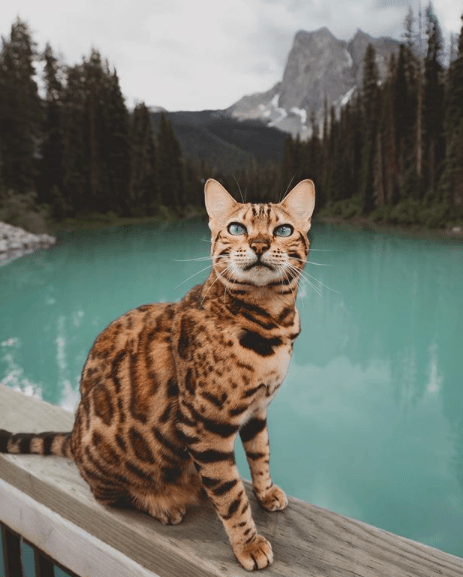 The Best Animal Instagram Accounts You Should Be Following