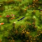 根道神社・シモネ(モネ)の池 ~絵画的美しさの透き通る池~