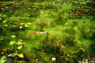 シモネの池09