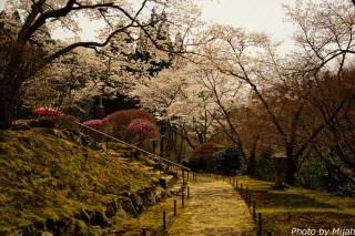 白龍園・桜02