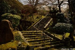 白龍園・桜03