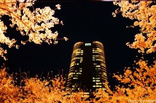 東京夜桜21