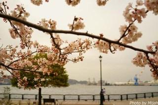 横須賀軍港・概要17