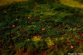 白龍園・紅葉11