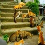愛猫家の聖地「猫島」 ~愛媛県青島~