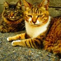福岡県・藍島(あいのしま) ~福岡の猫島で猫と自然に癒される~