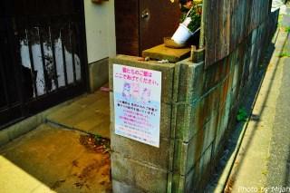 ainoshima-neko10