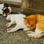 馬島 ~福岡県・藍島近くの、もう一つの穴場的猫島~
