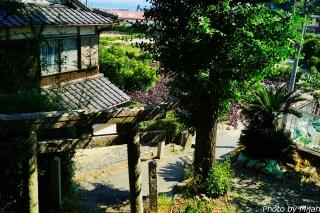 umashima-neko23