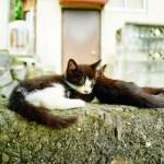 福岡県・相島(あいのしま) ~歴史的文化に触れながら猫島を満喫する~