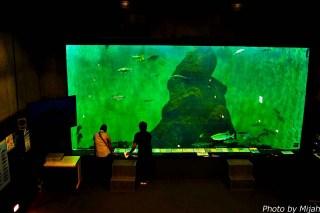 salmon-museum02