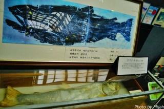 salmon-museum07