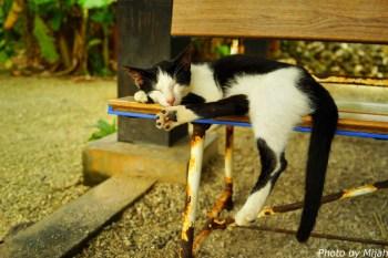 taketomi-cat23