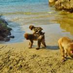 """サルの島・幸島 ~宮崎県南部で世界的に知られる""""文化を持つ猿""""たちに迫る~"""