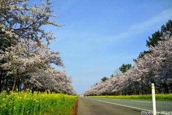 nanohana-road01