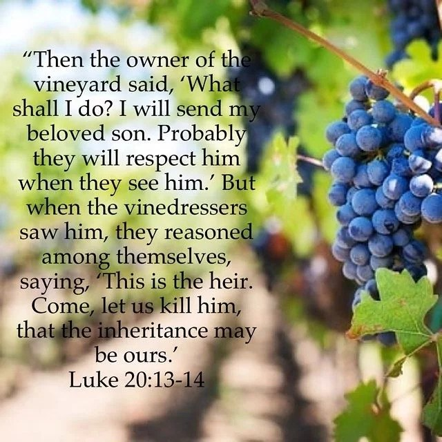 """Therefore He put on a body so that in the body He might find death and blot it out."" – St. Athanasius the Apostolic #parableofthevineyard #bible #coptic #vineyard #gospelreading #gospel #parable #son"