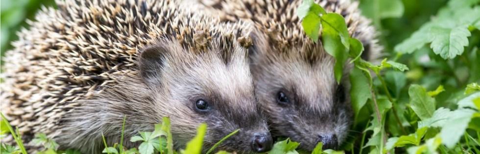 British Wildlife Care & Rehabilitation Course Level 3 - Endorsed UK Open College