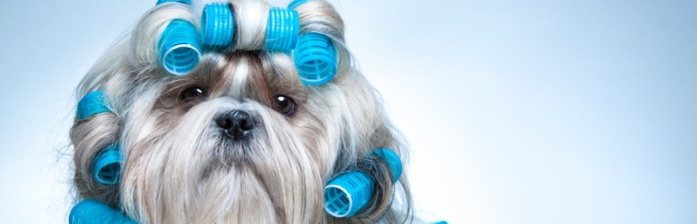Dog Grooming Course Level 3 - Endorsed UK Open College