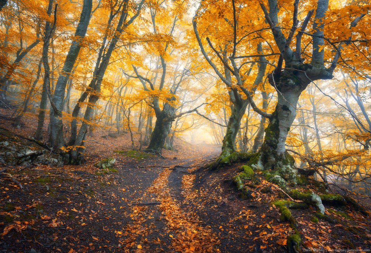 Fall Color Wallpaper For Desktop Fairy Tale Forest On Demerdzhi In The Crimea 183 Ukraine