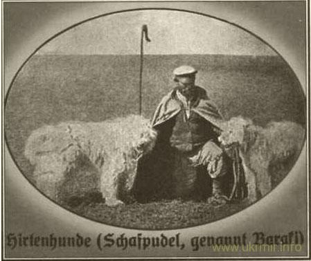 """""""Овчарки (шафпудель, называемый бараки)"""" Фото из книги В. Фальц-Фейна """"Аскания-Нова"""", 1930 / ovchar.org"""