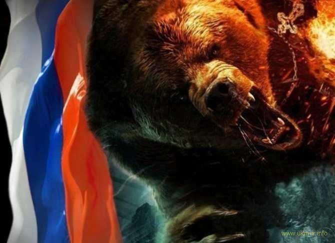 Фото медведя в полный рост
