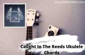 Caught In The Reeds Ukulele Chords By Chris Renzema